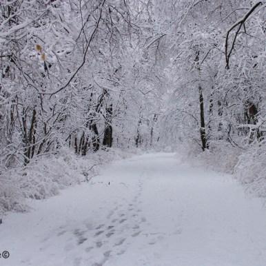 neige-jan-19 4 (1)