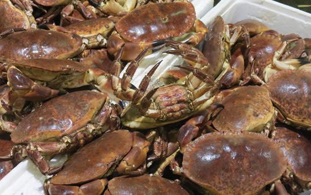 Buey de Mar - Brown crab