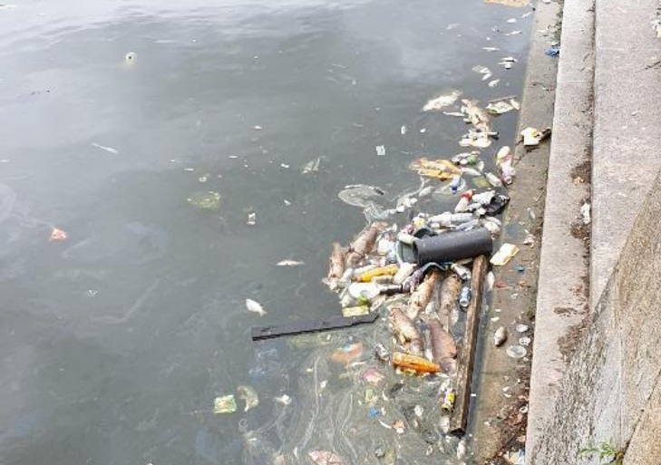 Large number of dead fish appear in Woolwich dock