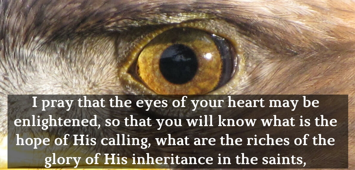Let us pray for the Deliverance of his People
