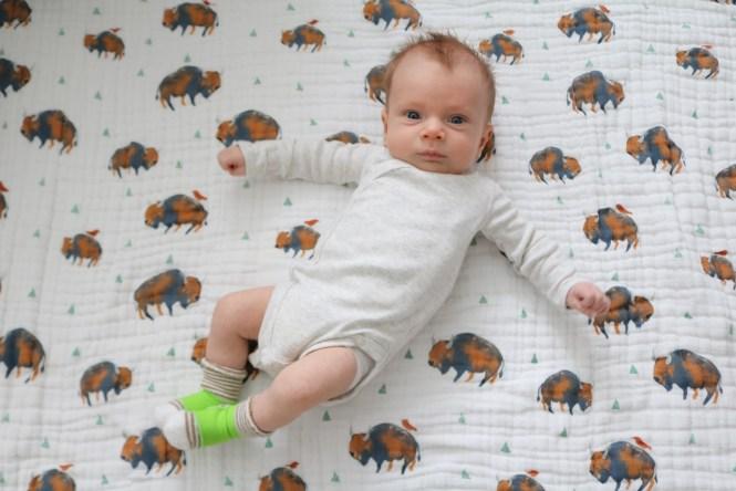 Henry James 6 weeks buffalo blanket