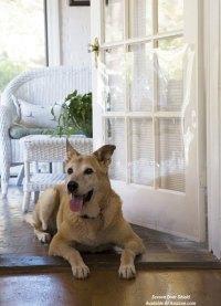 Screen Door Guards | Pet Guards for Screen Doors