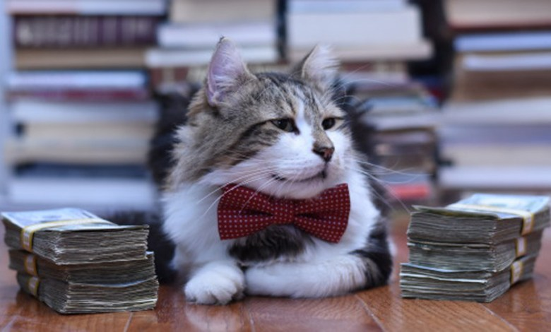 Photo of Arrivano i Rich Cats: i gatti milionari su lettiere di banconote…