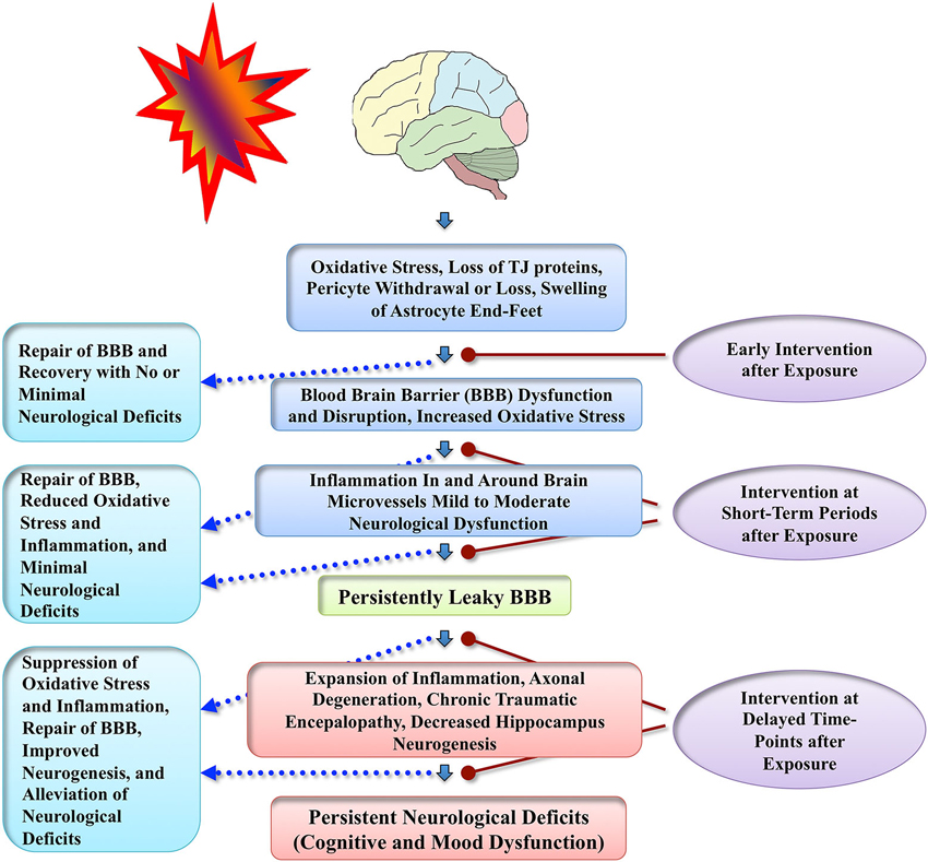 Frontiers | Blood brain barrier dysfunction and delayed ...