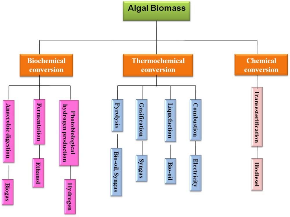 medium resolution of www frontiersin org figure 1 algal biomass conversion process for biofuel production