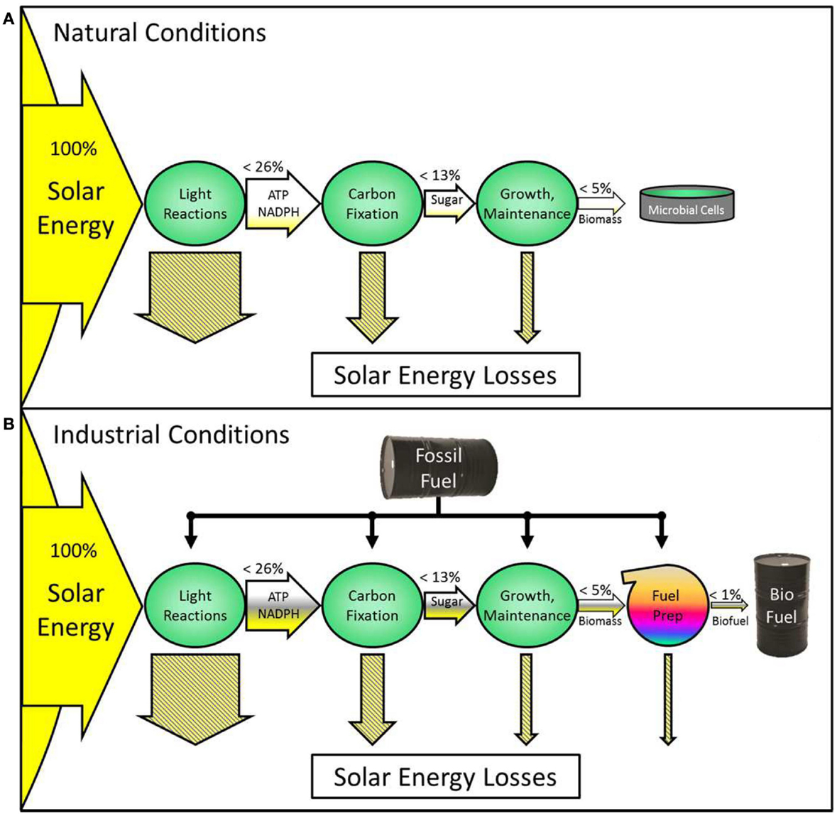diagram with inputs and outputs of photosynthesis process structured media wiring frontiers photosynthetic constraints on fuel from