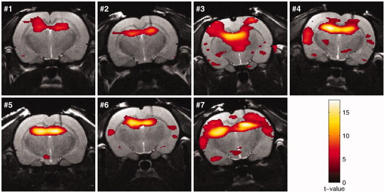 Frontiers The Power Of Using Functional FMRI On Small