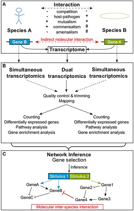 Frontiers How To Predict Molecular Interactions Between
