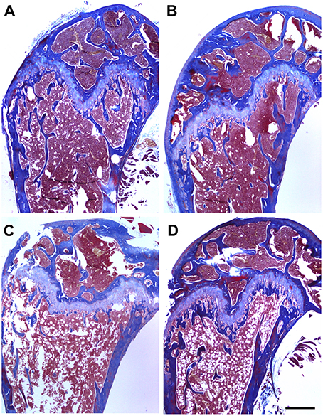 Frontiers  Prevention of Bone Loss in a Model of