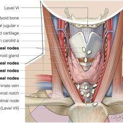 Boat Anatomy Diagram How To Make A Venn Frontiers | The Role Of Central Neck Lymph Node Dissection In Management Papillary ...