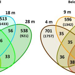 4 Variable Venn Diagram Cat 6 Connector Wiring Frontiers Ecophysiological Plasticity And Bacteriome