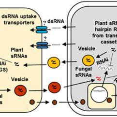 Plants And Animals Venn Diagram Of Protists Rb20det Maf Wiring Vs Fungi