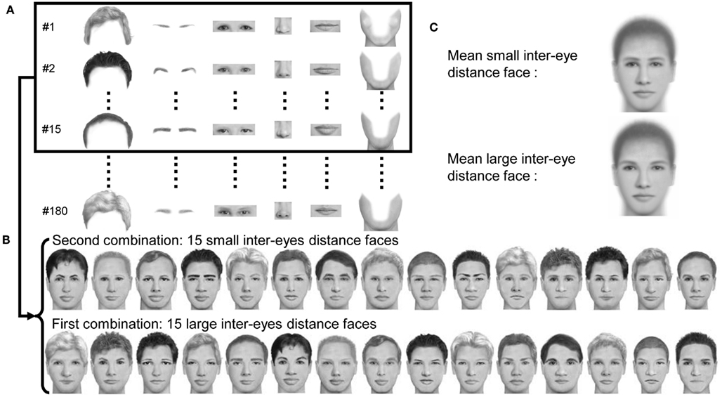Ethnicity by facial characteristics congratulate, what