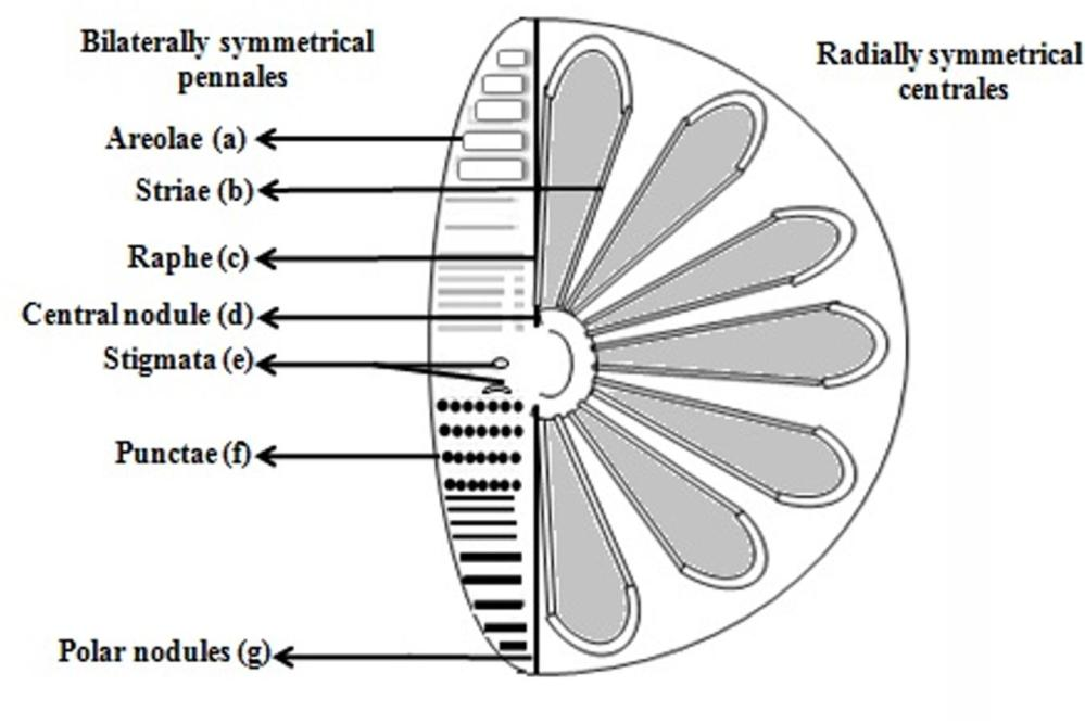 medium resolution of diagram of a diatom wiring diagram expert potential energy diagram of a diatomic molecule diagram of a diatom