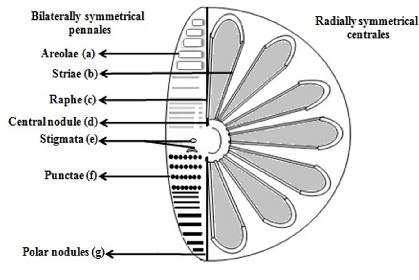 hight resolution of diagram of a diatom wiring diagram expert potential energy diagram of a diatomic molecule diagram of a diatom