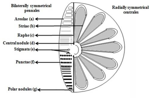 small resolution of diagram of a diatom wiring diagram expert potential energy diagram of a diatomic molecule diagram of a diatom