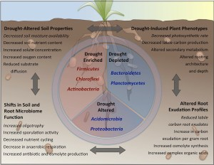 Frontiers | Drought Stress and RootAssociated Bacterial Communities | Plant Science