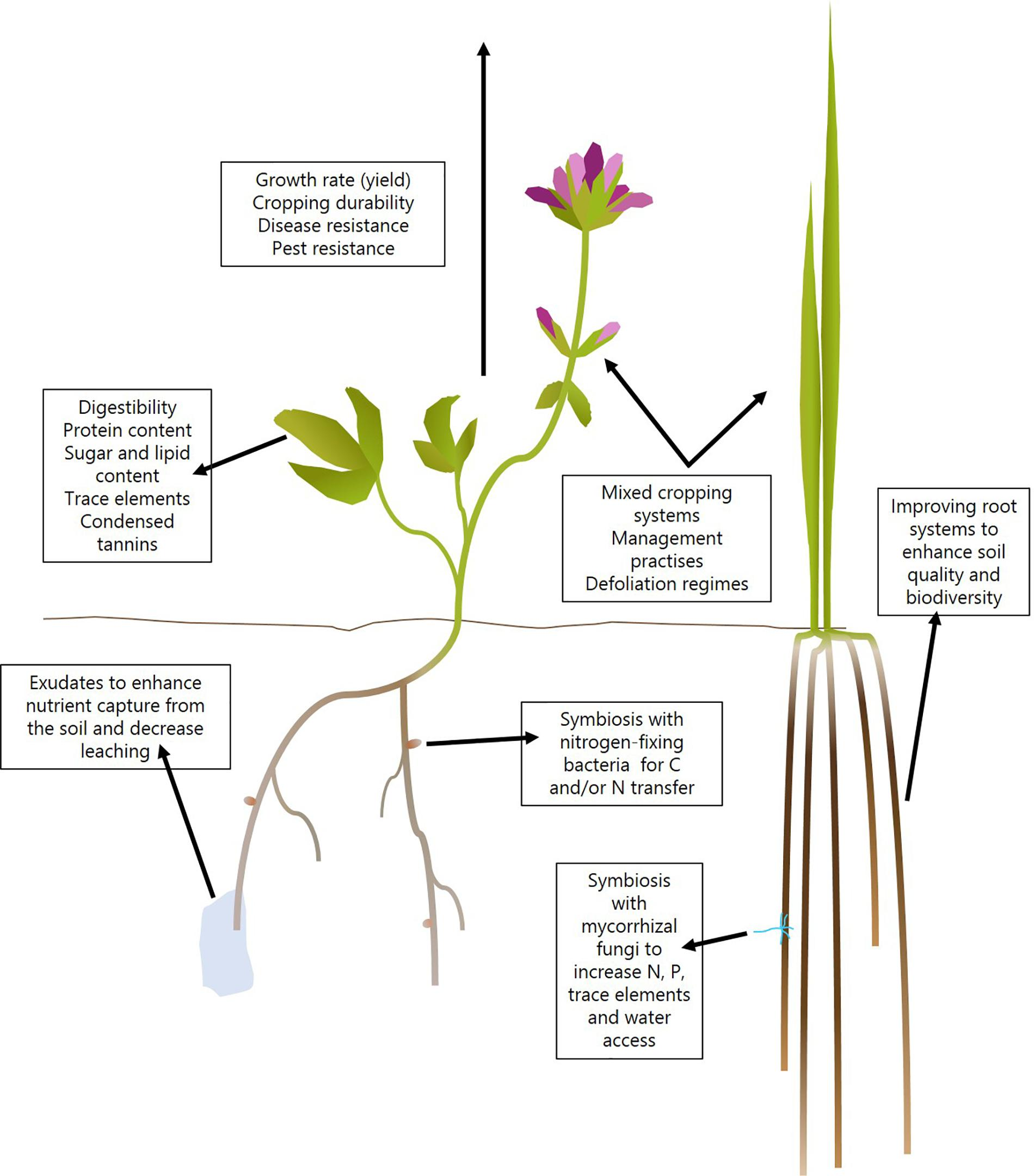 Improvement Of Nutritional Quality Of Plants - Nutrition Pics