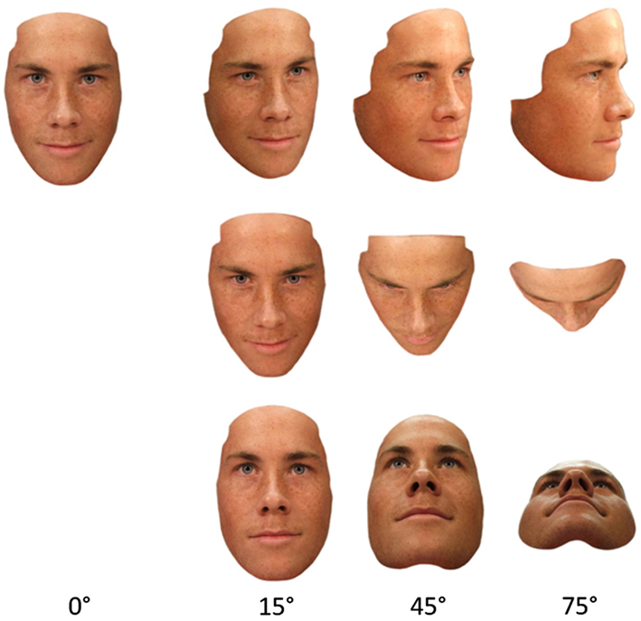 Frontiers The Face Inversion Effect Following Pitch And