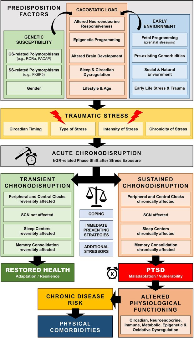 Post Traumatic Stress Disorder model