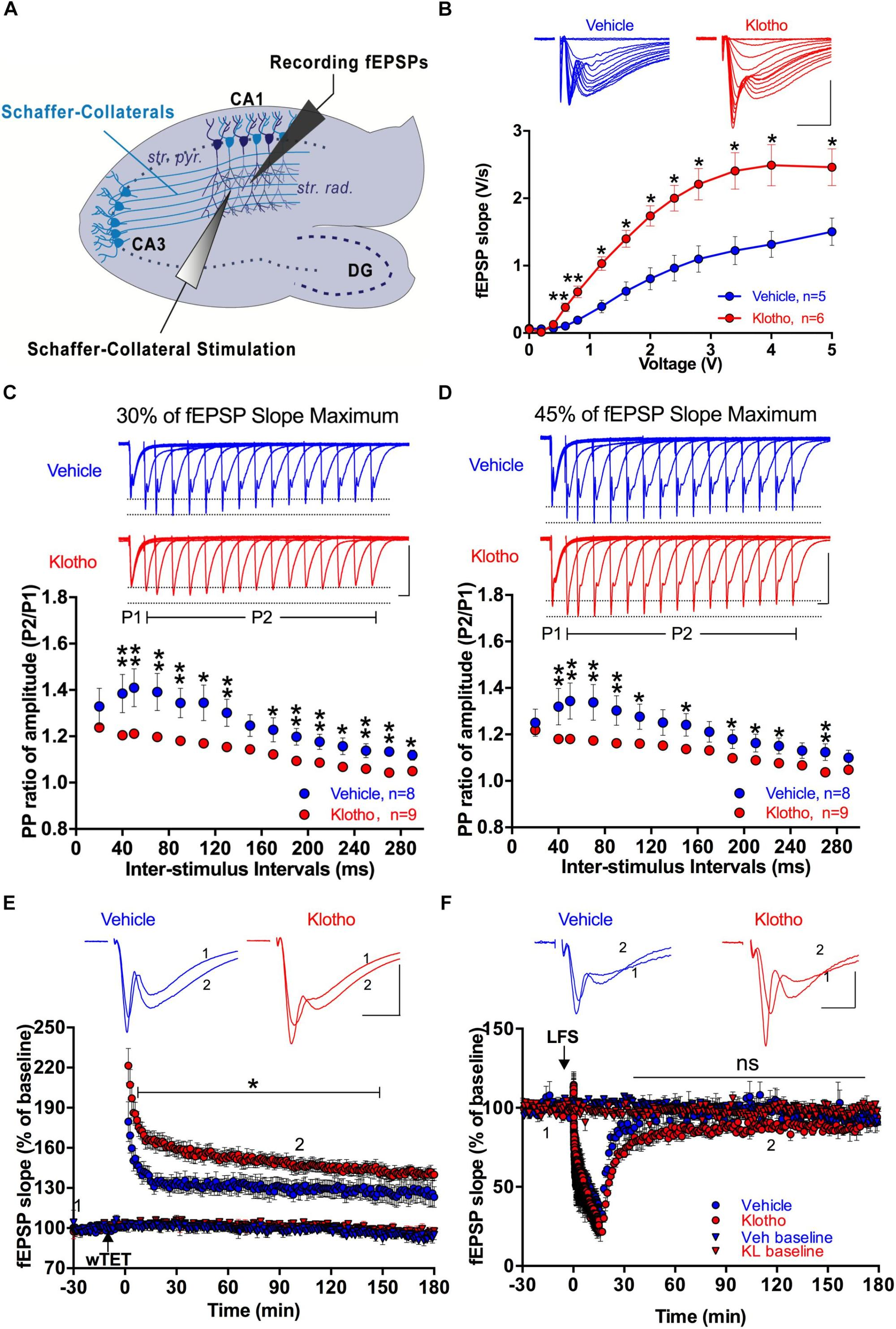 hight resolution of  king frontiers enhanced expression of secreted klotho in the on thermo