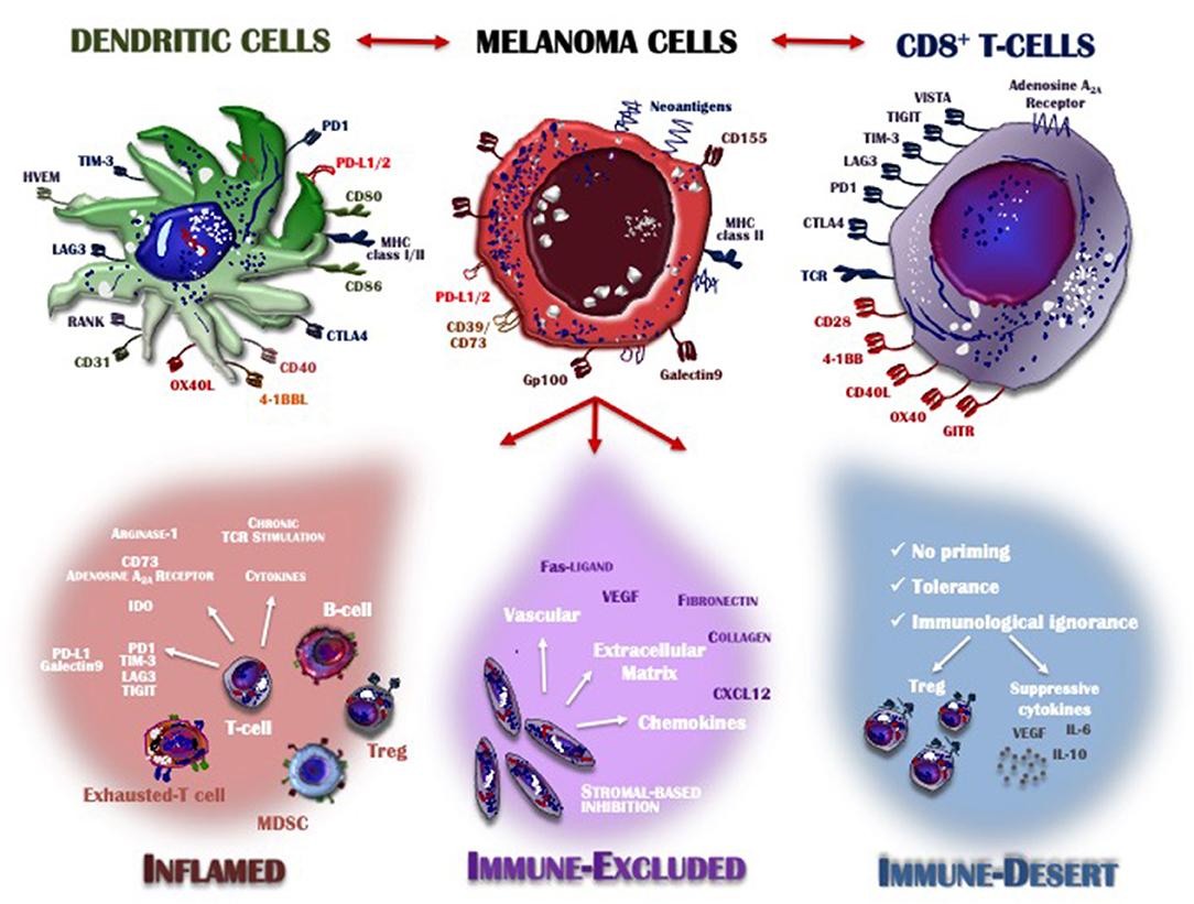 immune system evasion as hallmark