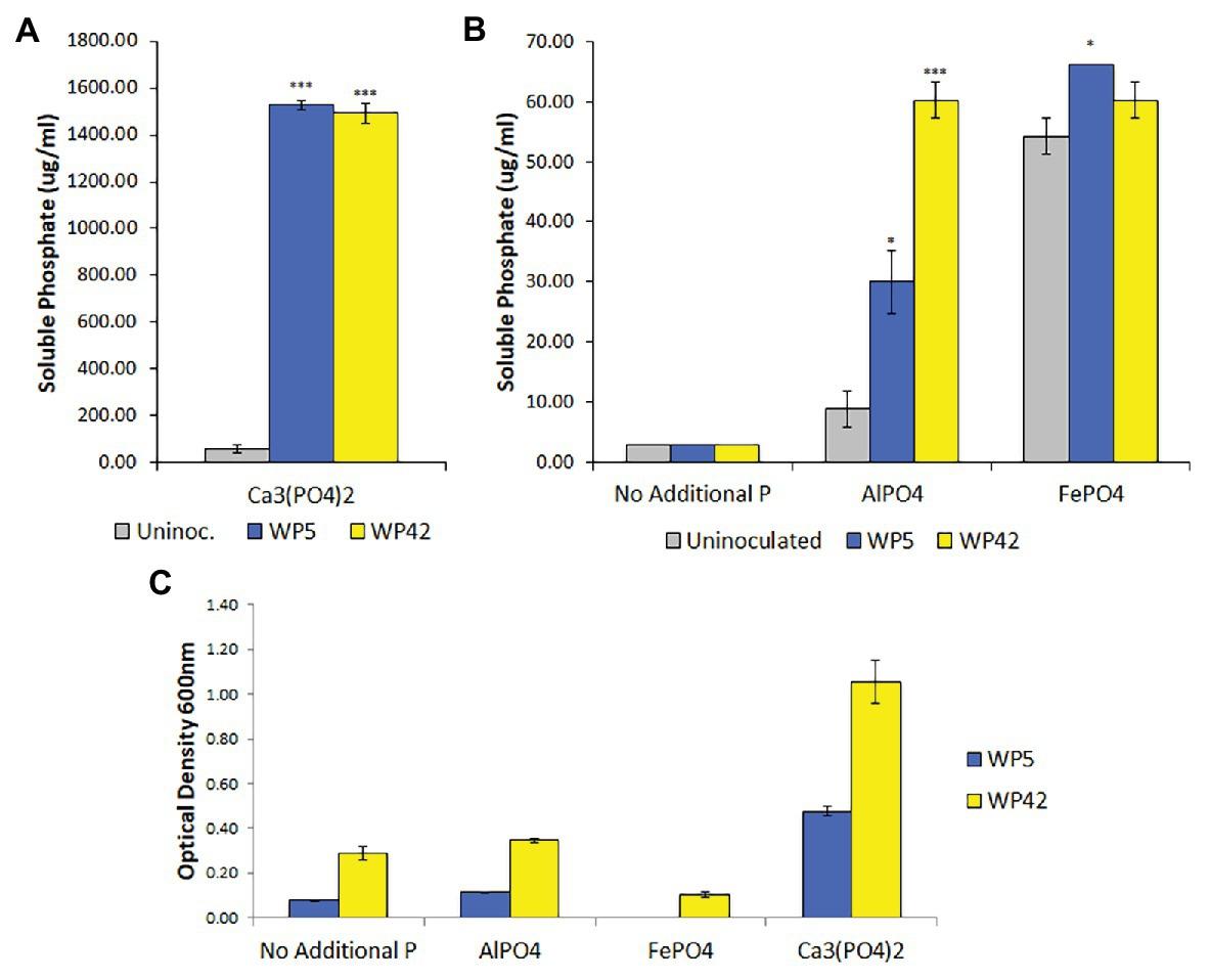endophyte promoted phosphorus
