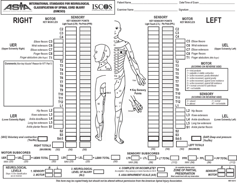 The Spinal Cord: Anatomy Of The Spinal Cord Review Sheet