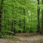 AMBIENTE. DA REGIONE LAZIO 3 MLN INVESTIMENTI IN SVILUPPO AREE FORESTALI.