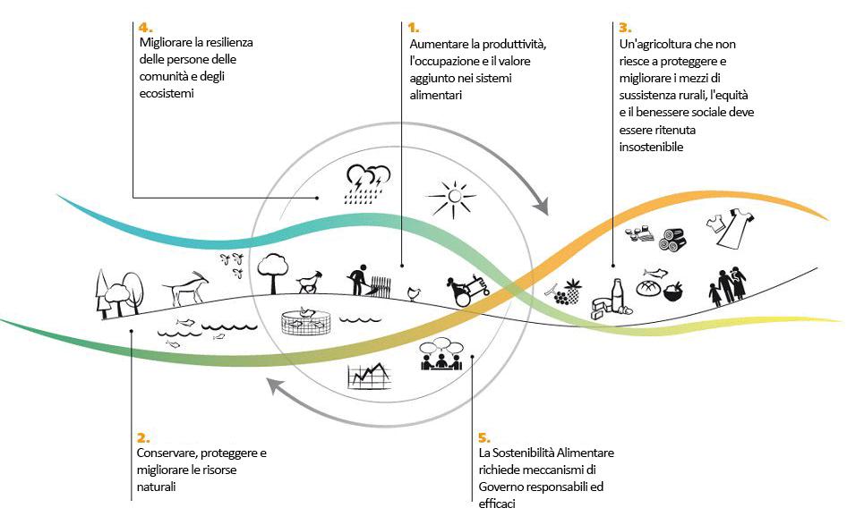i 5 principi della sostenibilita alimentare