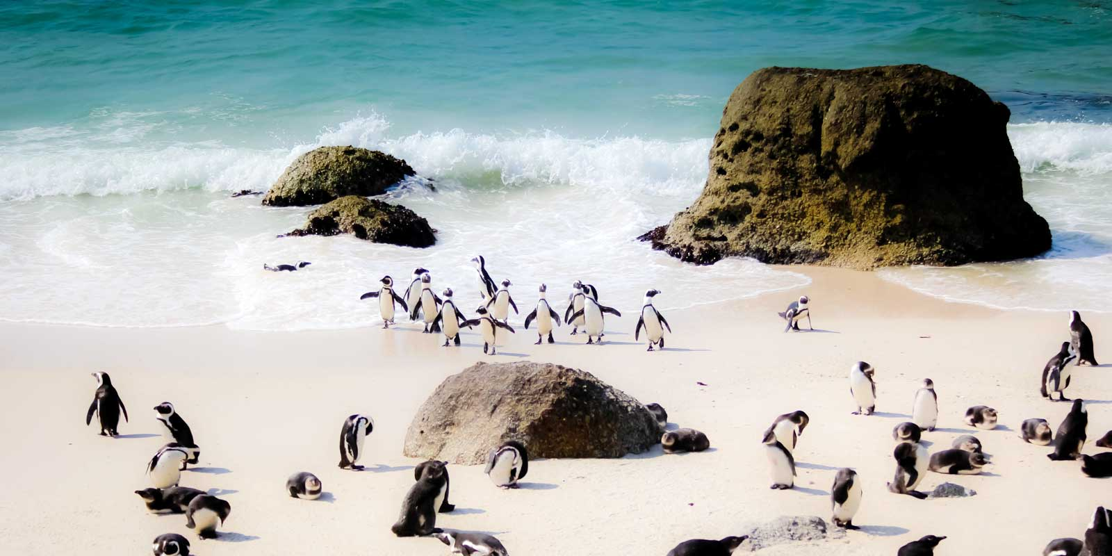 Explore South Africa, from the penguin filled beaches of Cape Town to vineyards of Stellenbosch.