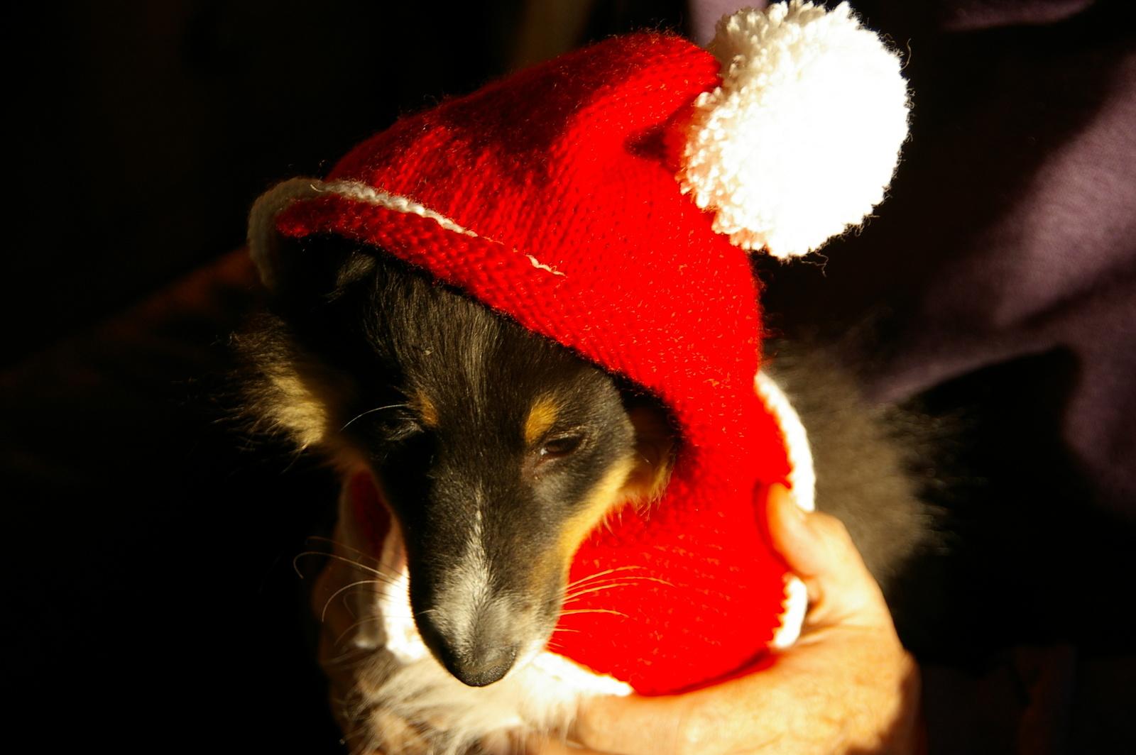 TRICOT : capuchon de Noël pour chien TUTORIEL GRATUIT