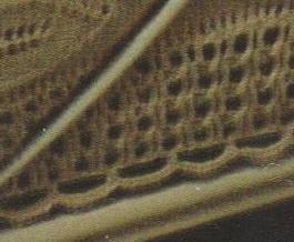 La bordure en arceaux