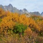 Herstkleuren op de Lofoten & Vesterålen, Noorwegen