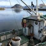 Lofotenvisserij, Noorwegen, Fru Amundsen