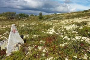 Dovrefjell, het letterlijk en figuurlijke hoogtepunt van de route.