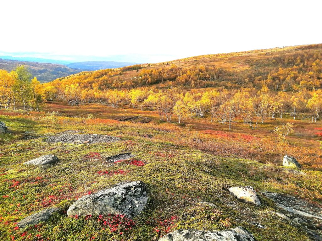 herfstkleuren Noorwegen