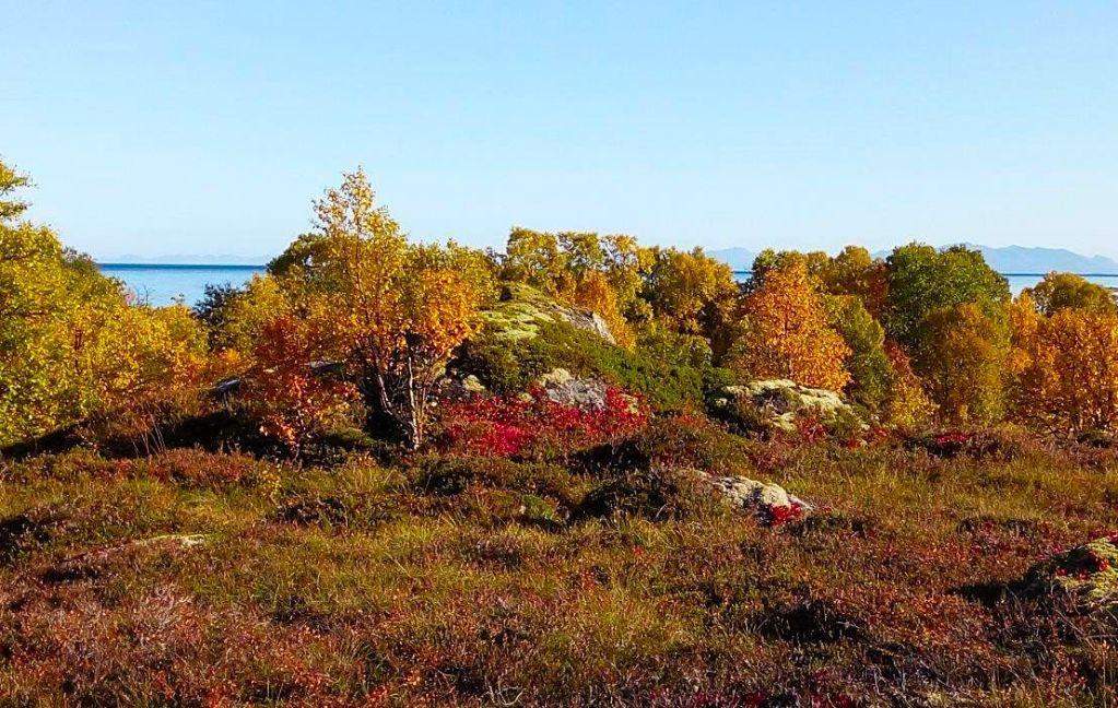 Herfst op de Vesterålen