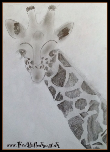 FruBilledkunst - giraf - Sharon 14 år. Tegnet med almindelig HB blyant.