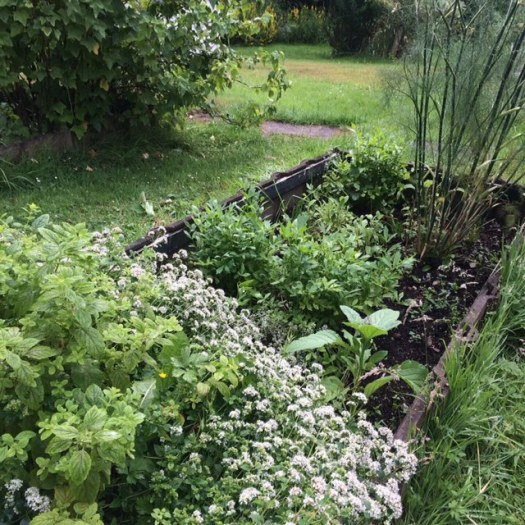 a herb garden in the food forest