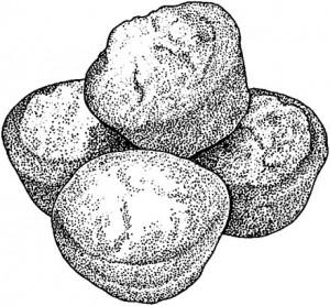 Yankee Cornbread