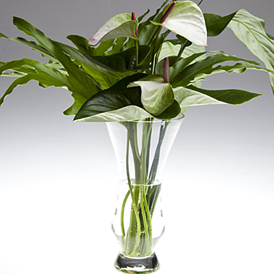 Leaves From Tropical Plants Make Long Lasting Arrangements