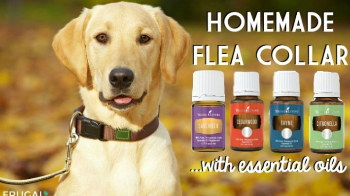 homemade-dog-flea-collar-frugal-coupon-living-essential-oils-500