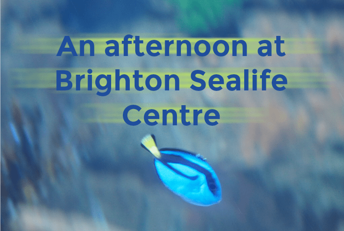 Days Out:  An afternoon at Brighton Sealife Centre…