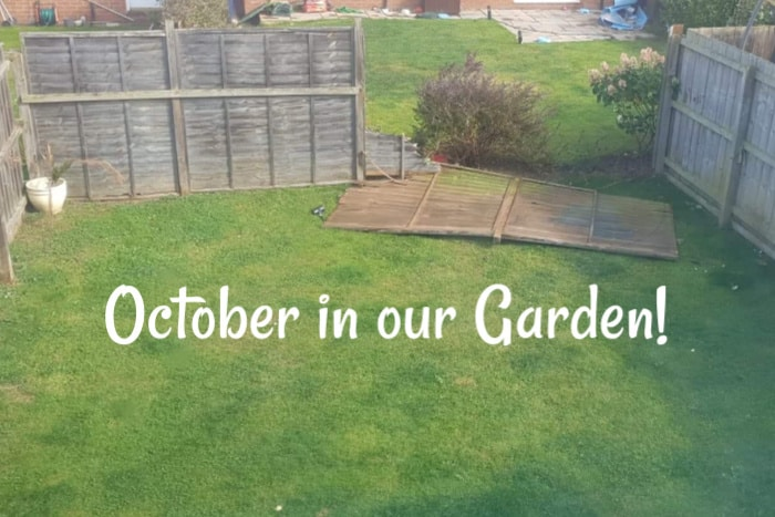 October in my garden….