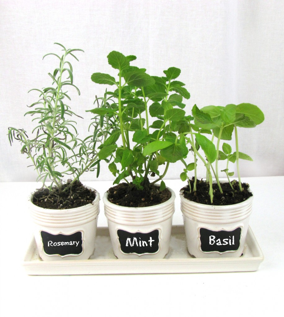Kitchen Windowsill Herb Garden Frugal Upstate