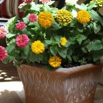 Easy Flower Pot Update Using Spray Paint
