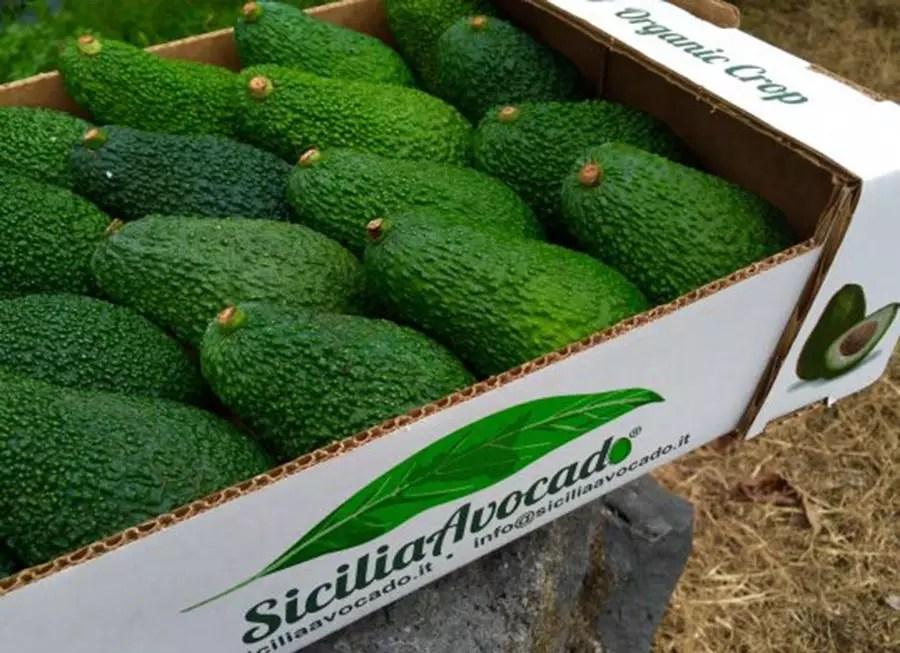 sicilia-avocado