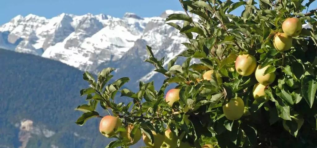 mele-melinda-montagne-trentino-1024x680