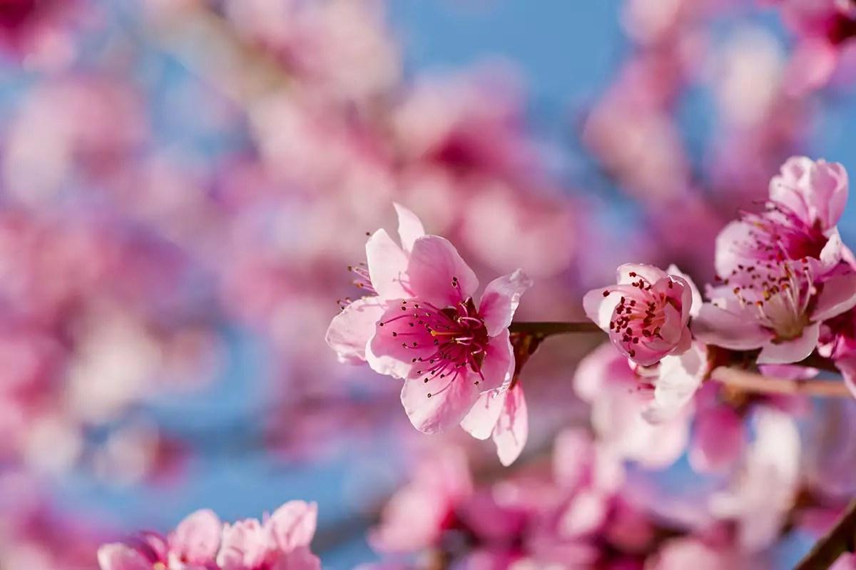 primavera anticipata